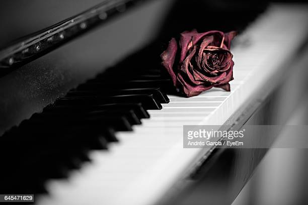Dry Rose On Piano