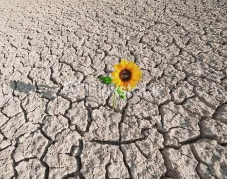 Plant Resources of Arid and Semiarid Lands