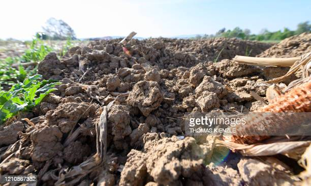 Dry soil is seen on a field in Remseck near Ludwigsburg, southern Germany, on April 24, 2020. - Farmers fear harvest damages due to the dry, sunny...