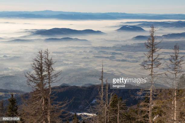 dry spruce trees - kranj stock pictures, royalty-free photos & images