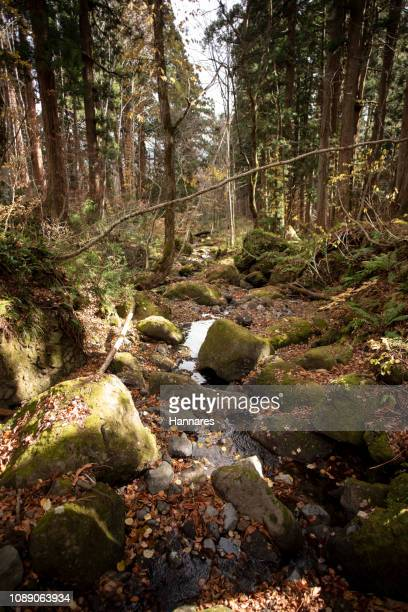dry stream - wilderness area stock pictures, royalty-free photos & images