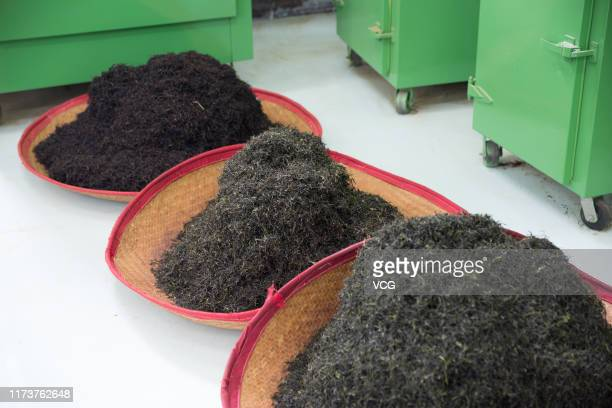 Dry tea leaves are seen on September 7 2019 in Zhanjiang Guangdong Province of China