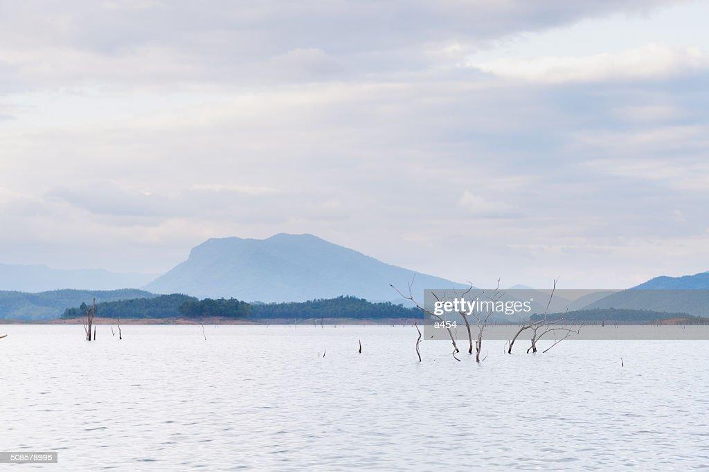 Dry tree dead in dam : Stock Photo