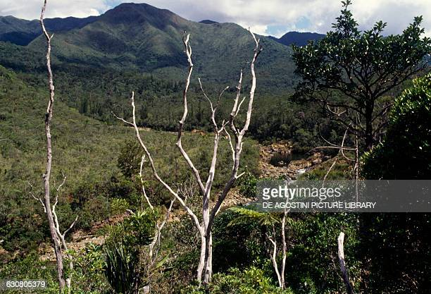 Dry trees amongst lush vegetation Yate New Caledonia Overseas territory of the French Republic