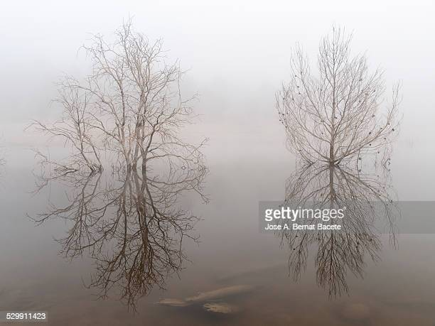 dry trees surrounded with water a day of fog - petrified log stock pictures, royalty-free photos & images