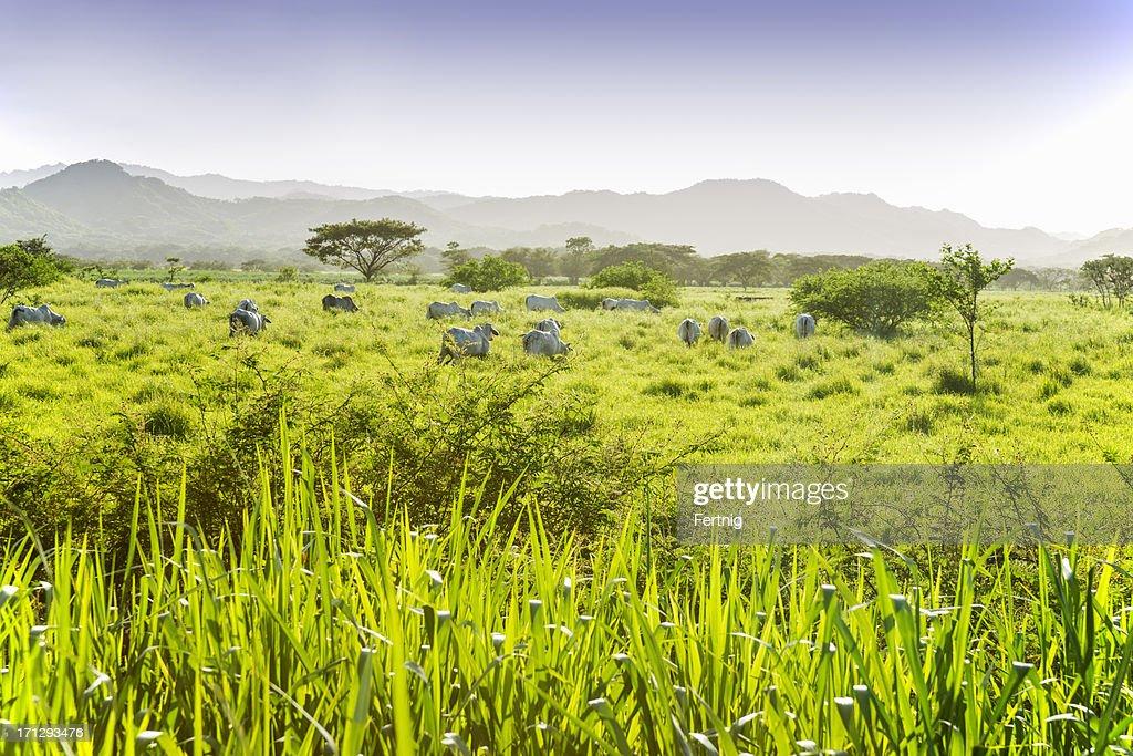 Dry tropical savannah in Guanacaste, Costa Rica : Stock Photo