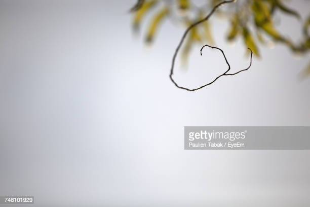 dry twig against clear sky - paulien tabak stock pictures, royalty-free photos & images