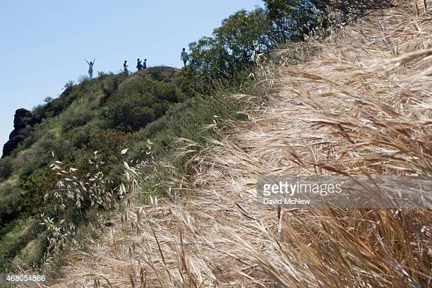 Dry vegetation is seen as a hiker raises her arms on a ridge in Griffith Park on March 29 2015 in Los Angeles California A recordbreaking series of...