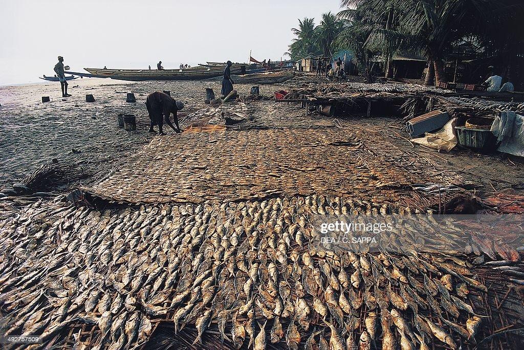 Drying fish... : News Photo
