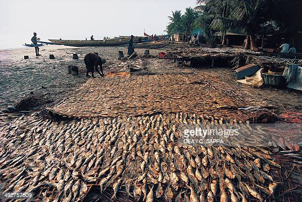Drying fish Banjul Gambia