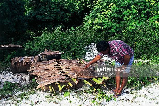 Drying fish Madoogali The Maldives