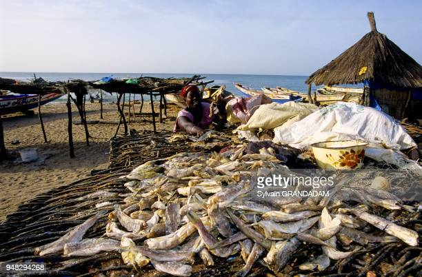 Drying fishes Catholic village of Joal Fadiuth Senegal