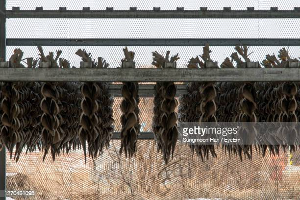 drying fishes on wall against sky - gwangju stock pictures, royalty-free photos & images