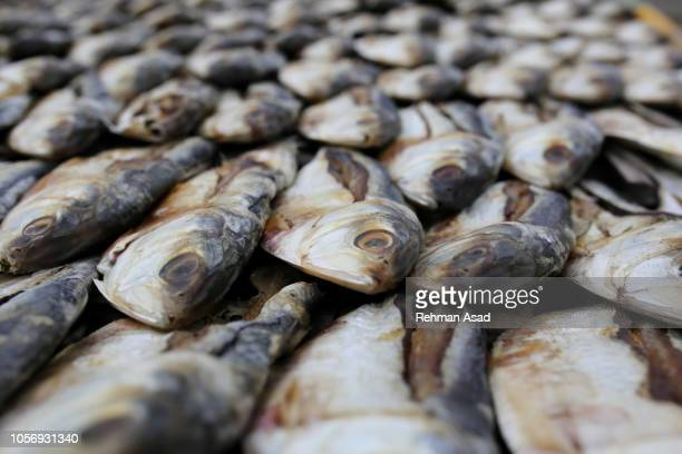 Drying Fishes
