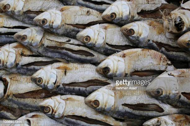 drying fishes - 干物 ストックフォトと画像
