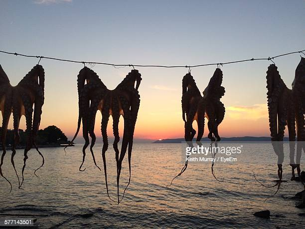 Drying Octopuses Against Sea At Sunset