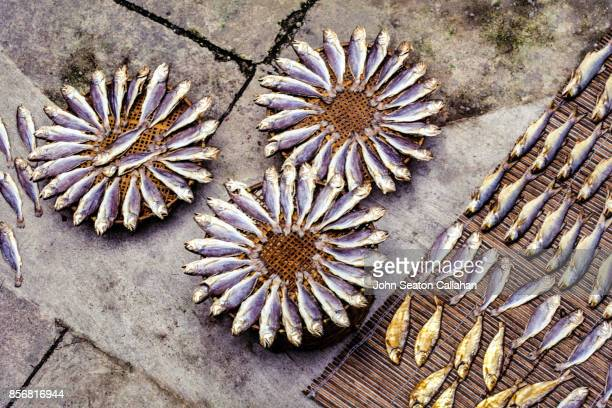 drying salt fish in macau - macao stock pictures, royalty-free photos & images