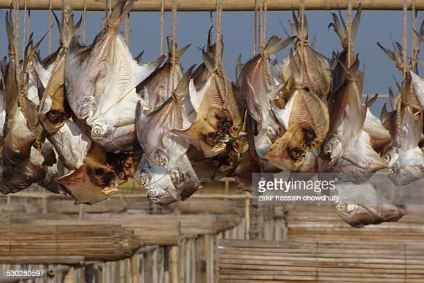 Drying sea fish under sun