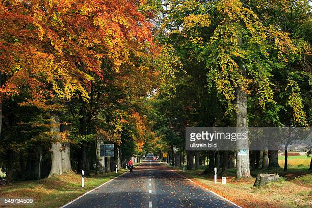 DSchlangen North RhineWestphalia NRW DSchlangenOesterholzHaustenbeck Fuerstenallee boulevard avenue deciduous trees oaks
