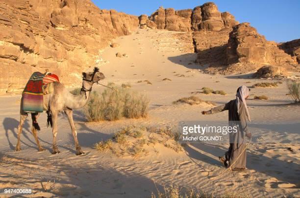 Désert du Sinaï en Egypte Bédouins et dromadaires Désert du Sinaï en Egypte Bédouins et dromadaires