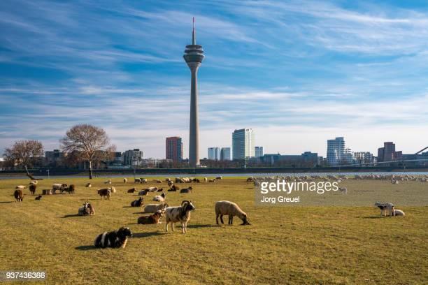 düsseldorf skyline - düsseldorf stock pictures, royalty-free photos & images