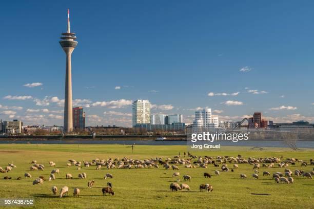 düsseldorf skyline - düsseldorf stock-fotos und bilder