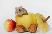 dsungarian dwarf hamster sapphire looking from