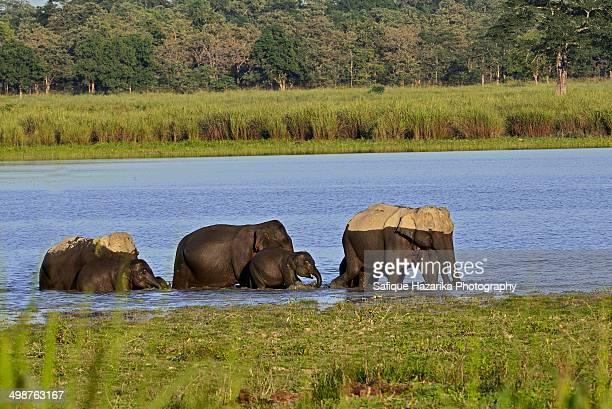 Dual tone elephants