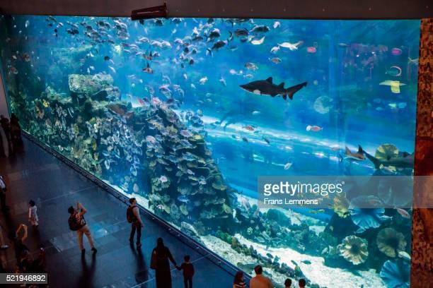 Dubai, Aquarium in Dubai Mall