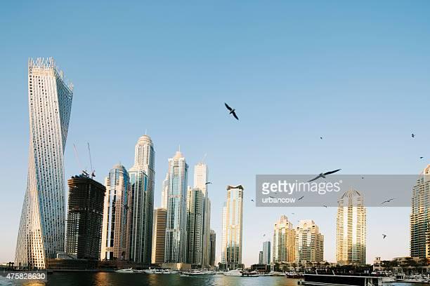Dubai contemporary skyscrapers, harbourside cityscape, skyline. Clear sky with seabirds