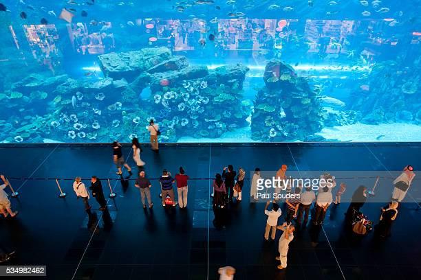 Dubai Mall Aquarium, Dubai, UAE