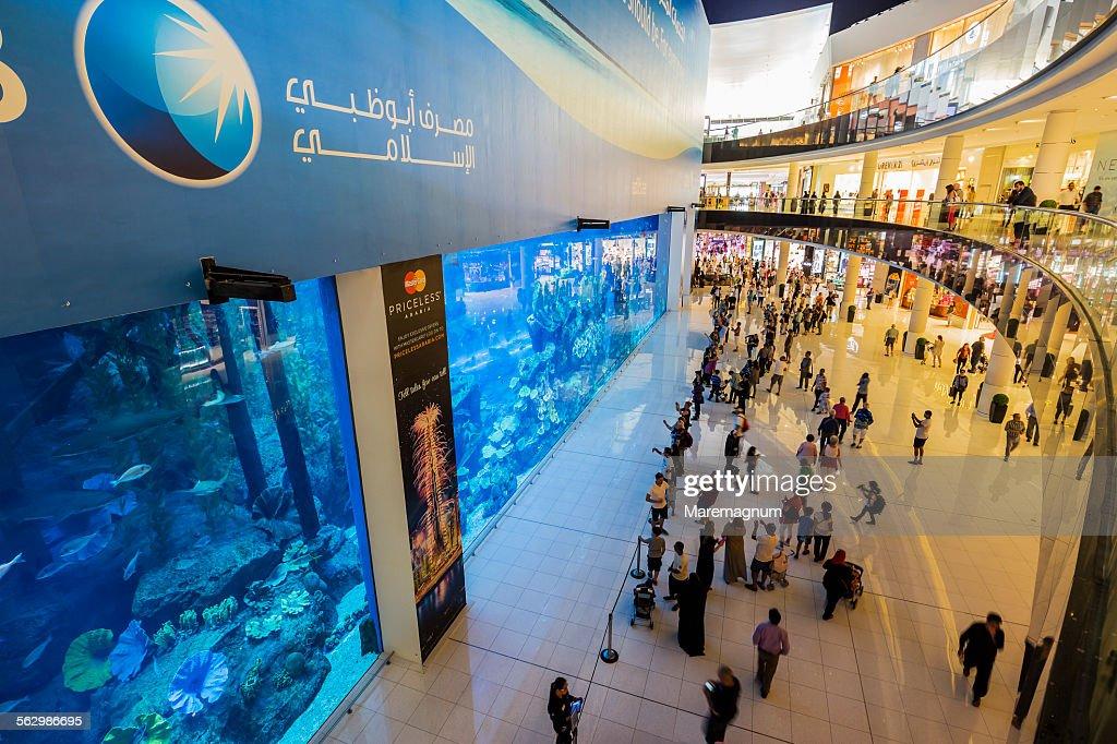 Dubai Mall Dubai Aquarium And Underwater Zoo High-Res ...