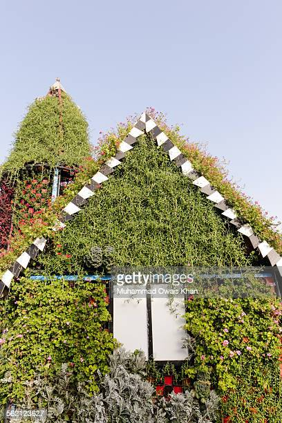 dubai miracle garden - miracle stock photos and pictures