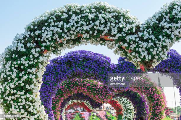 dubai miracle garden with over million flowers - miracle stock photos and pictures