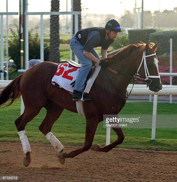 A jockey rides US horse Mustanfar trained by Kiaran McLaughlin of USA during the morning trackwork at the Nad AlSheba race course 20 March 2006 in...