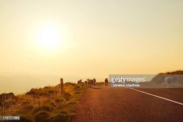 dublin mountain road in summer - catherine macbride stock-fotos und bilder