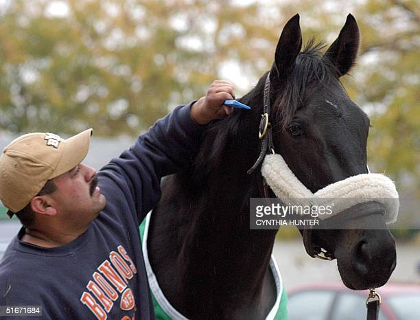 Dublino of Ireland and trained by Loura de Seroux gets her mane combed by groom Alfredo Garcia after a morning workout for the Breeders Cup 25...