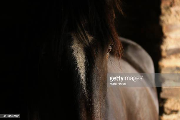 duchess in the dark 2 - hairy bum stock pictures, royalty-free photos & images