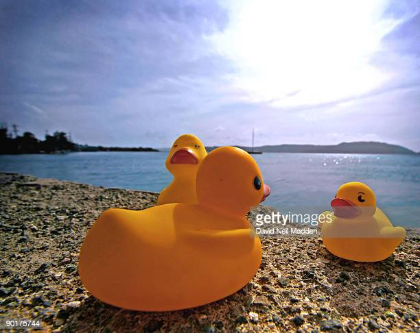 Duck family at the beach