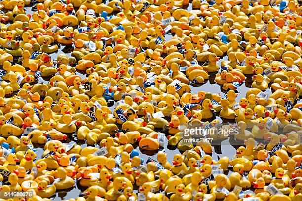 Festival de canard
