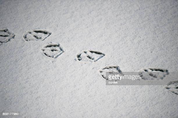 Duck footprints in snow