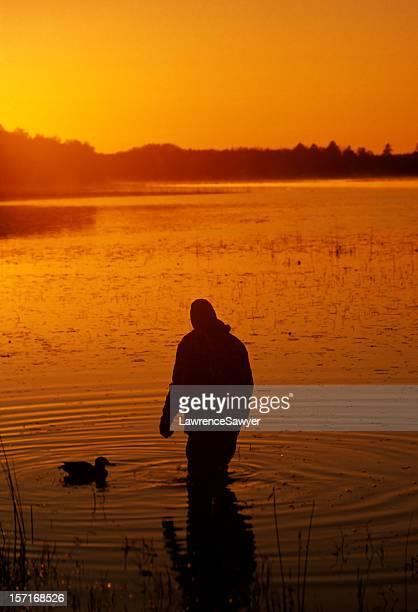 anatra e uccello cacciatore - anatra uccello acquatico foto e immagini stock