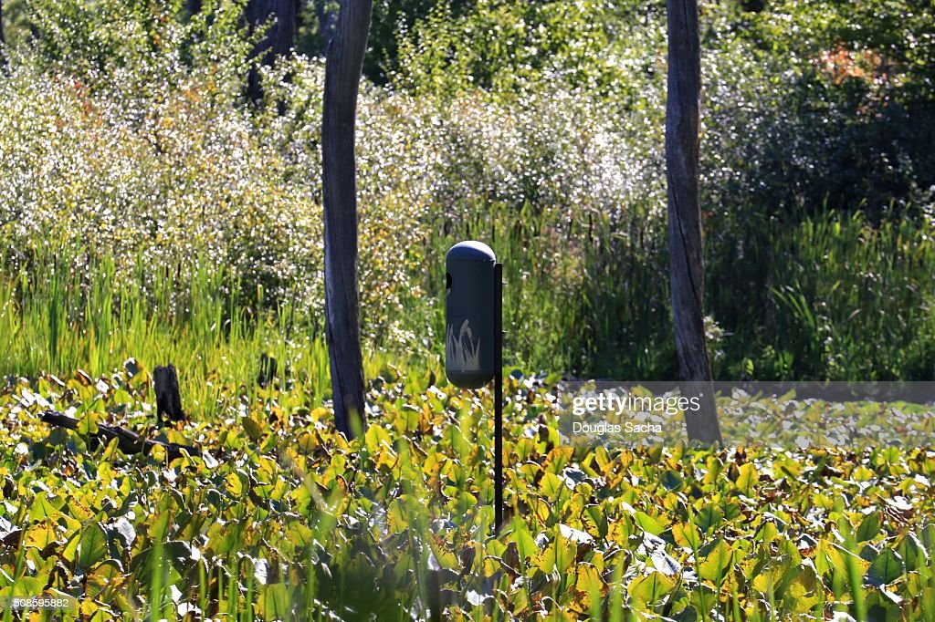 Duck Nesting Box in wetlands : Stock Photo