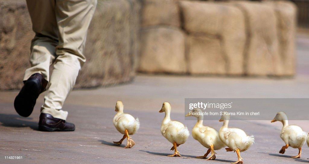 Duck in zoo.