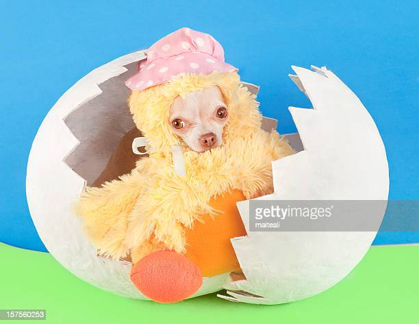 duck - dog easter stock pictures, royalty-free photos & images