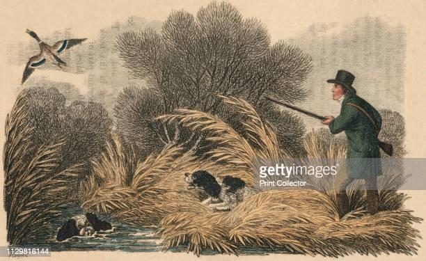 'Duck Shooting' 1810 Hunter and his dogs pursuing wild ducks in a marsh [Ackermann London 1810] Artist Samuel Howitt