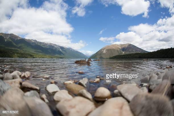 A duck swiming on Rotoiti lake, New Zealand