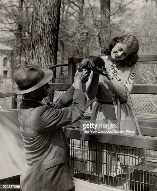 DuckBilled platypus called the most wonderful of all mammals is shown to a visitor at New York zoo The platypus is a true mammal yet lays eggs Three...