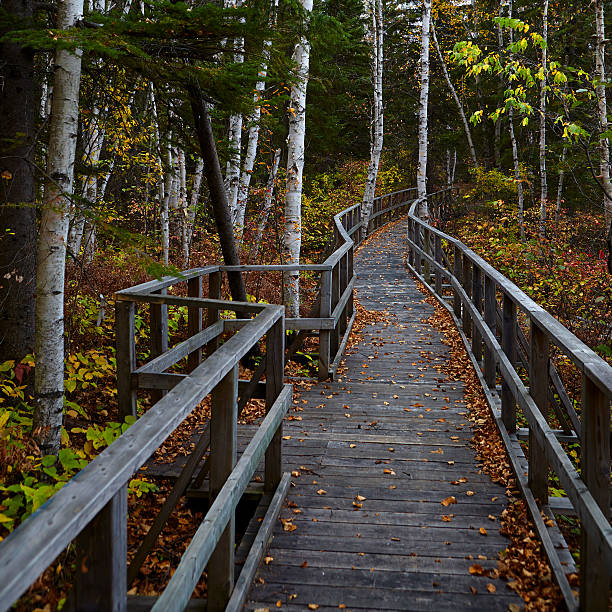 Duckboard path across the Aiguebelle park