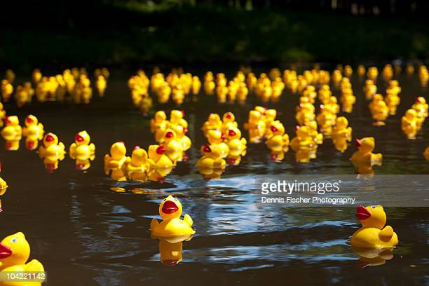 Duckrace in Karlsuhe, Germany